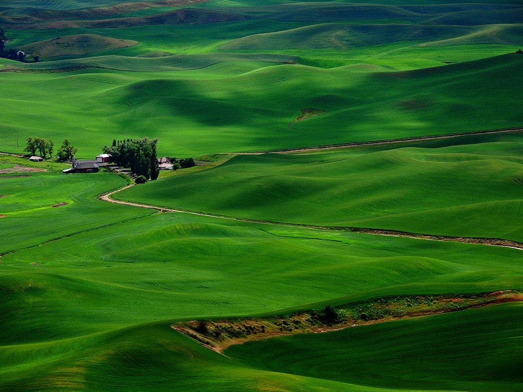 Palouse Farm - Digital(From Above) - Name Withheld Per Request