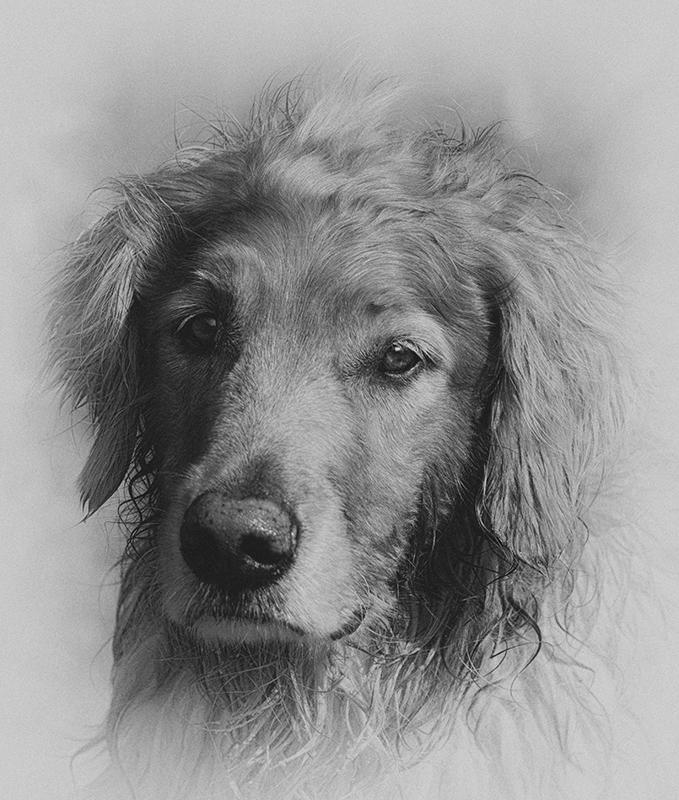 Barney - Monochrome Print - Larry Syverud