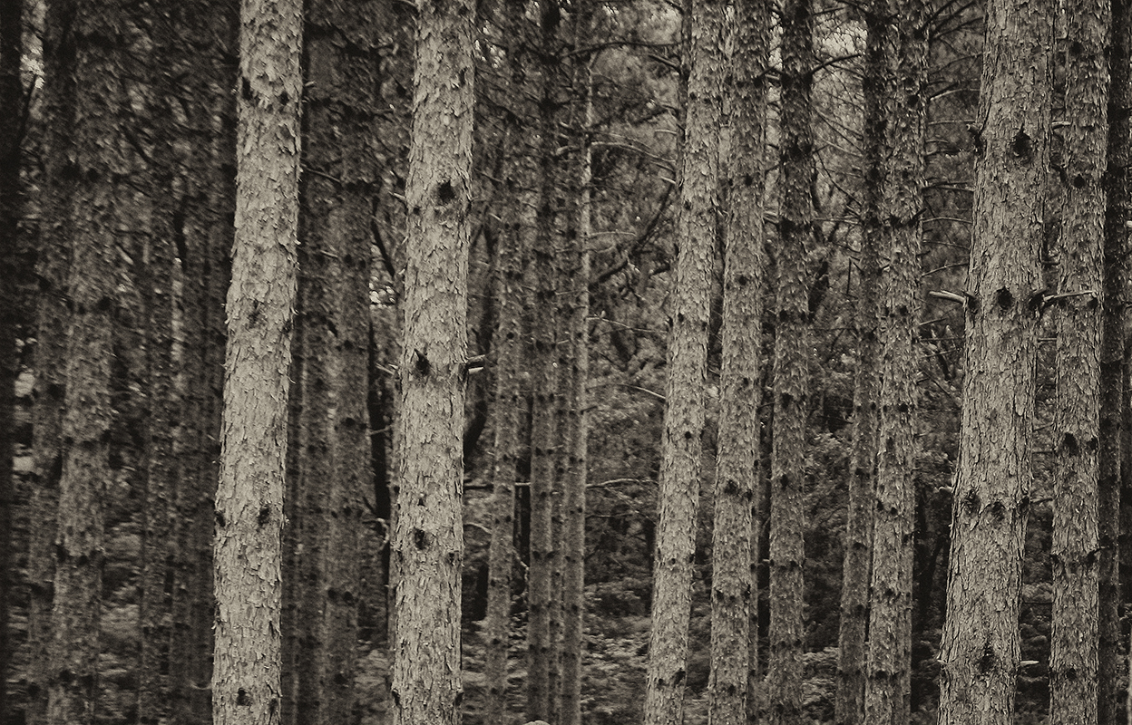 Dark Behind it Stood the Forest - Monochrome Print - Name Withheld Per Request