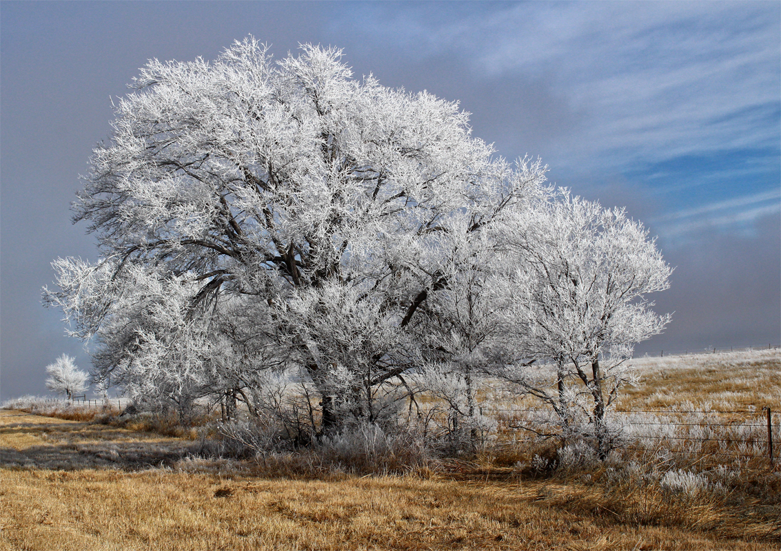 Texas Frosty Trees - Digital(Realistic) - Name Withheld Per Request