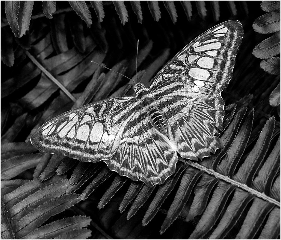 Resting on Ferns - Monochrome Print - Peggy Boike