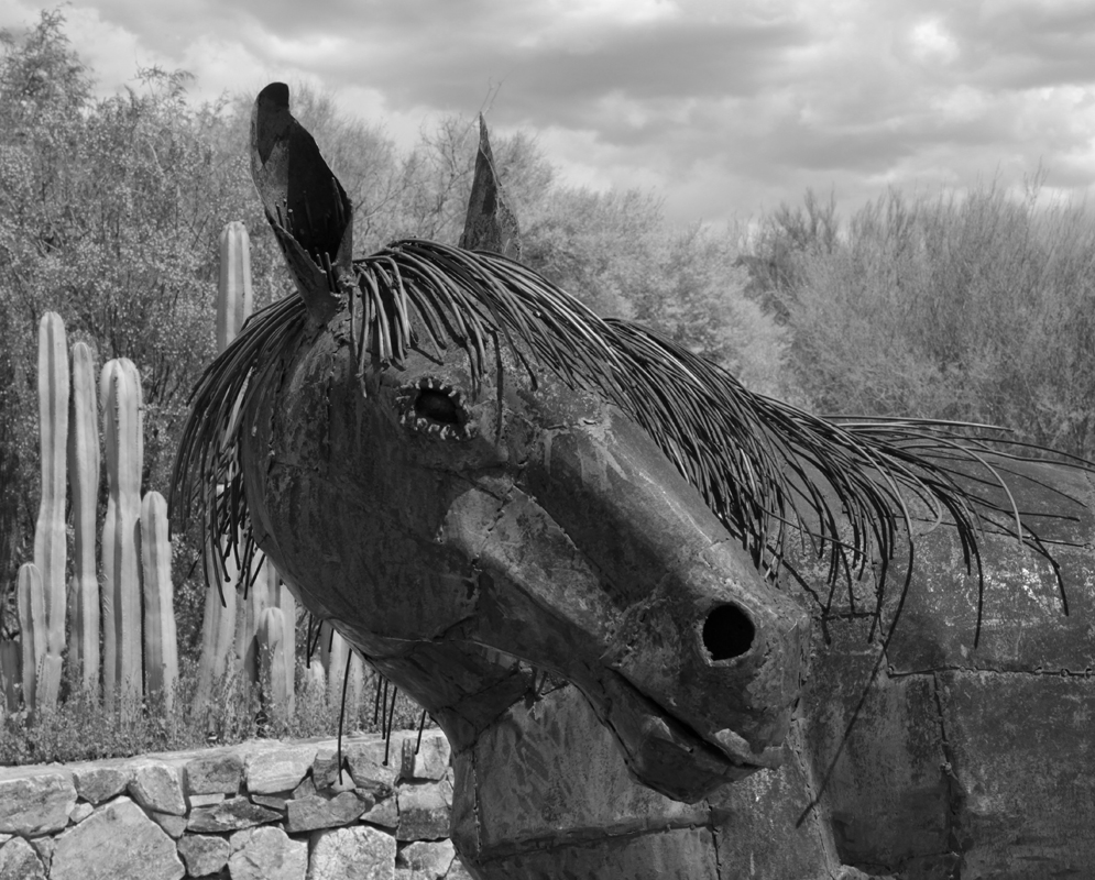 Horse - Digital(Open) - Name Withheld Per Request