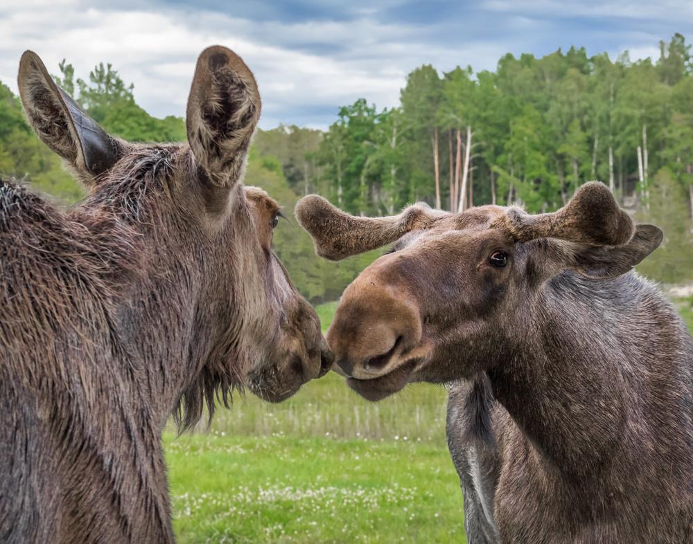 Neighborhood Gossip - Digital(Open) - Cindy Carlsson
