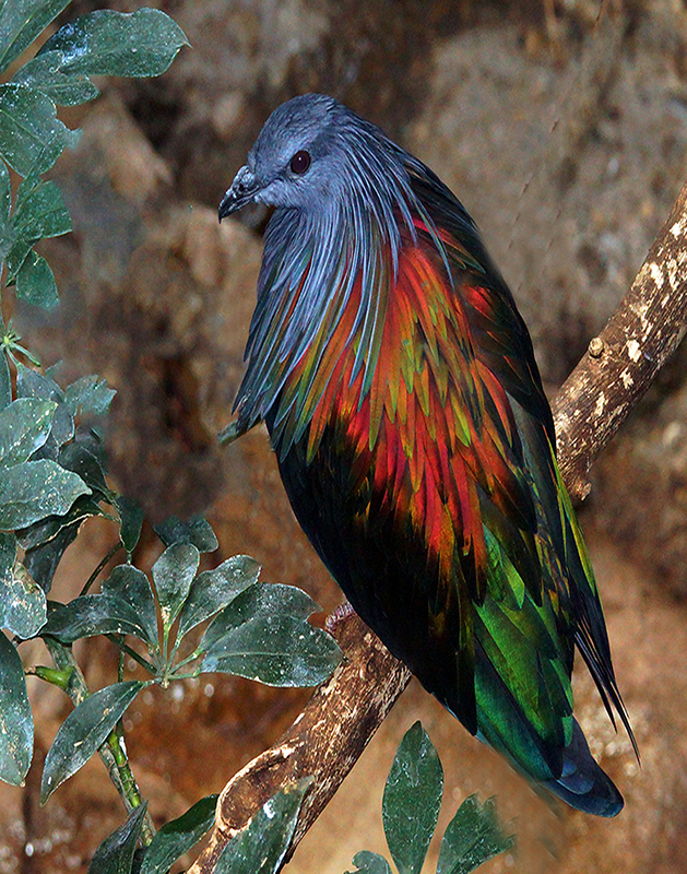 Bird of Many Colors - Color Print - Larry Syverud