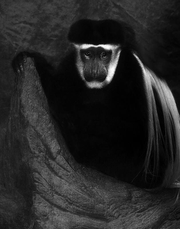 Contemplative - Monochrome Print - Larry Syverud