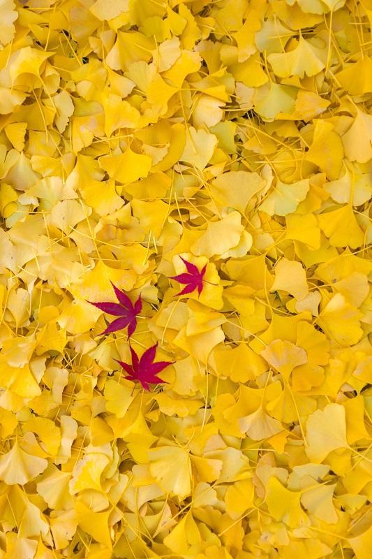 Autumn Carpet - Digital(Patterns) - Name Withheld Per Request