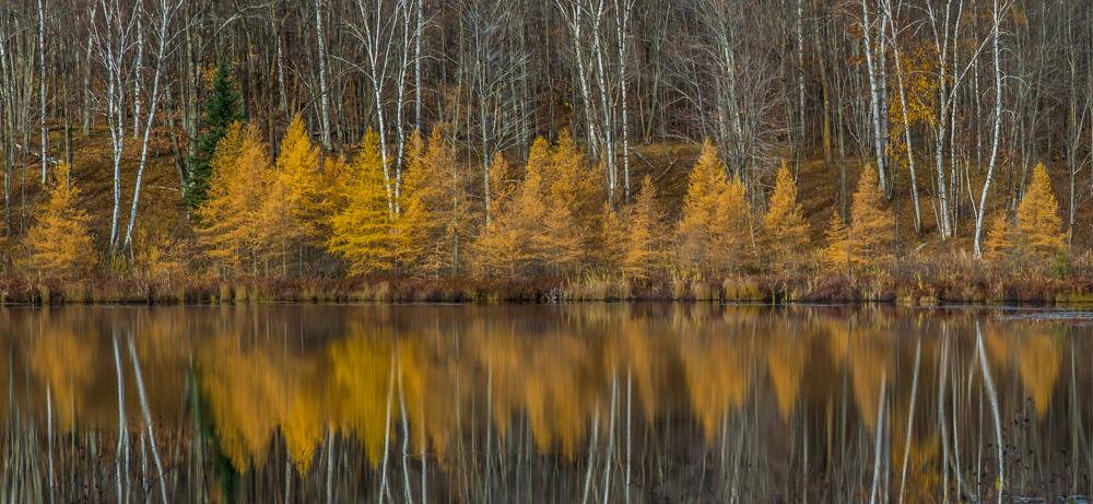 Birch and Tamarack - Digital(Patterns) - Cindy Carlsson