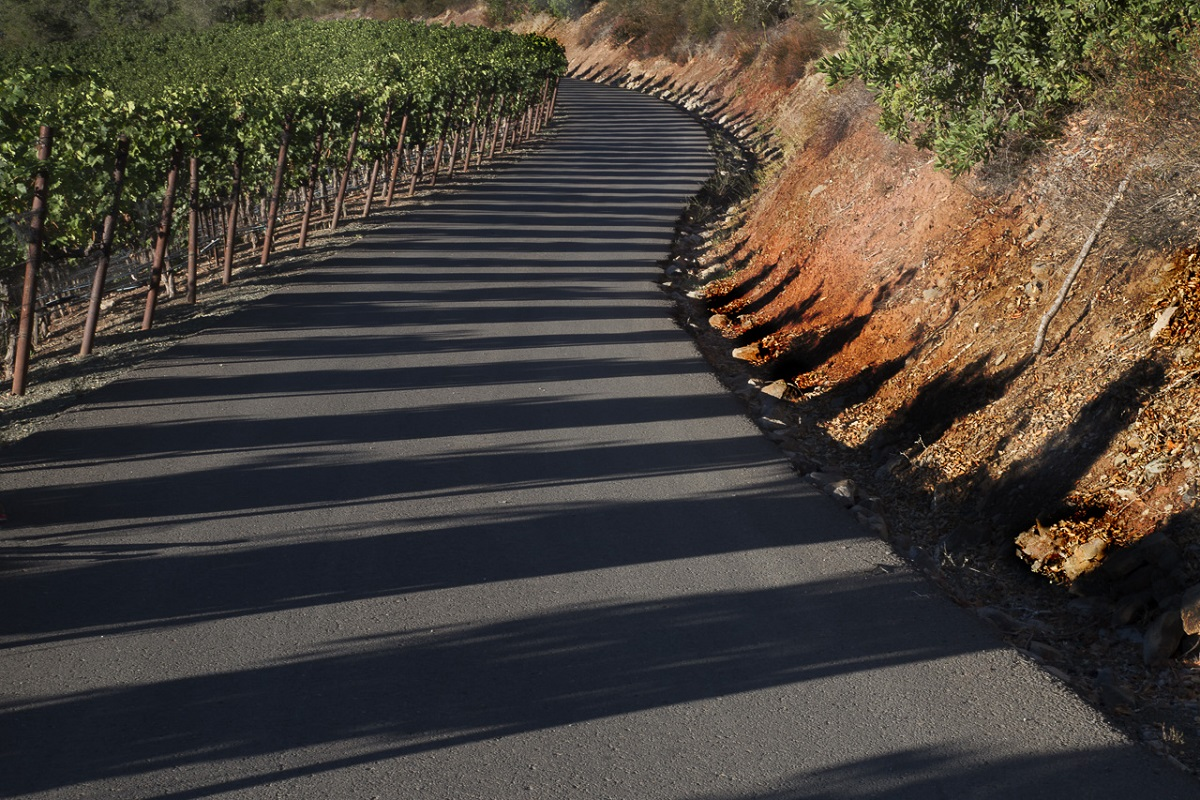 Vineyard Shadows - Digital(Patterns) - Name Withheld Per Request