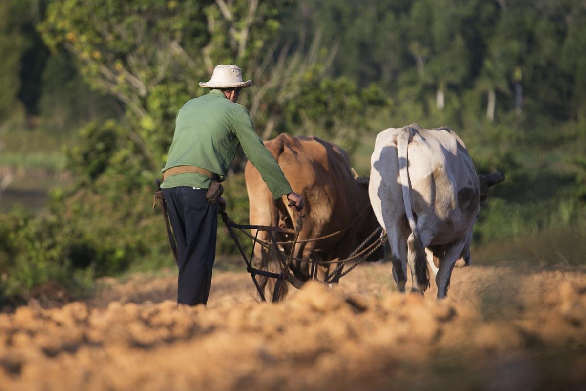 Viñales Cuba - Digital (Phototravel) - Name Withheld Per Request