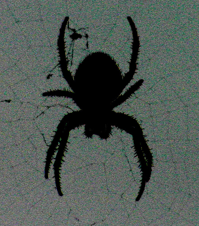 Spider - Digital(Silhouette) - Name Withheld Per Request