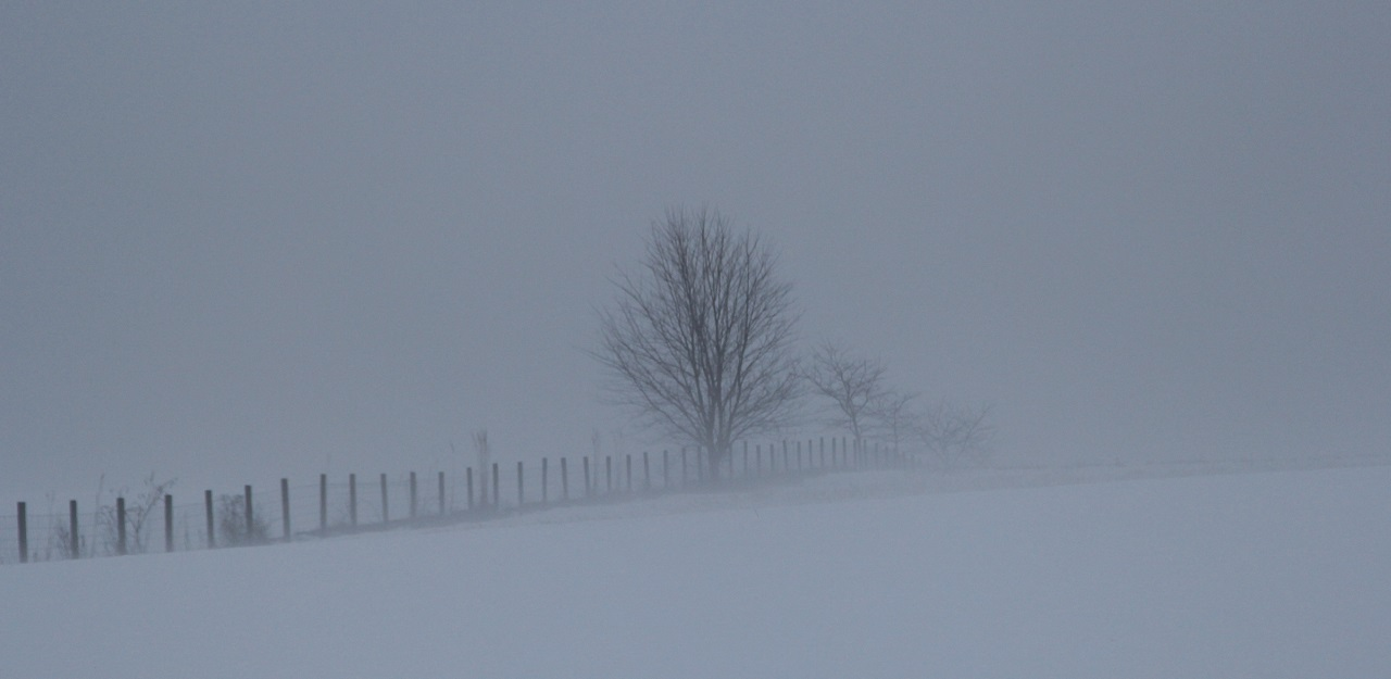 Tree in the Fog - Digital(Silhouette) - Name Withheld Per Request