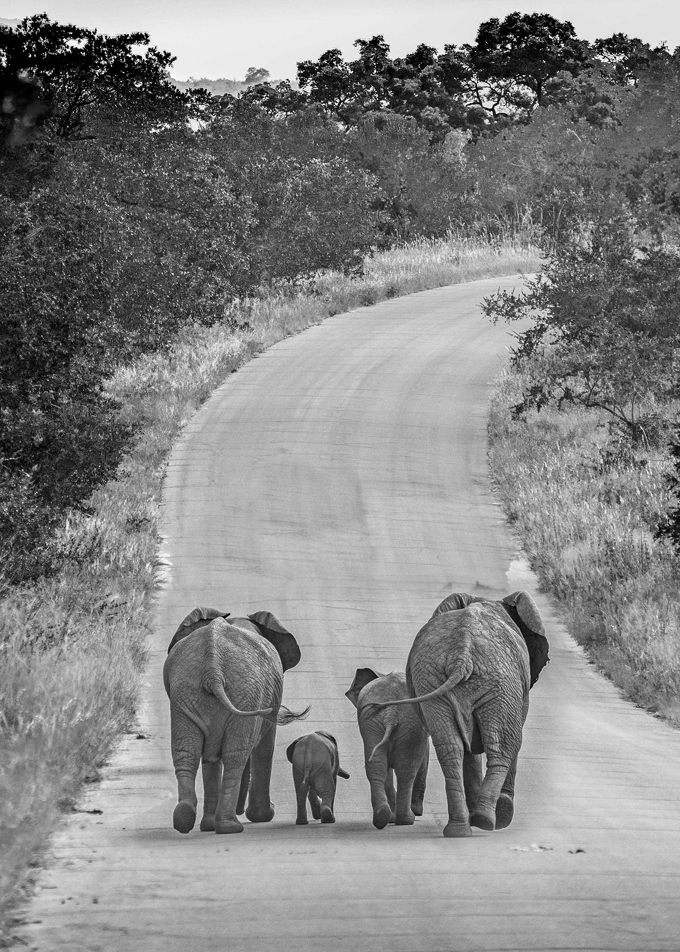 Family Stroll - Monochrome Print (Open) - Name Withheld Per Request
