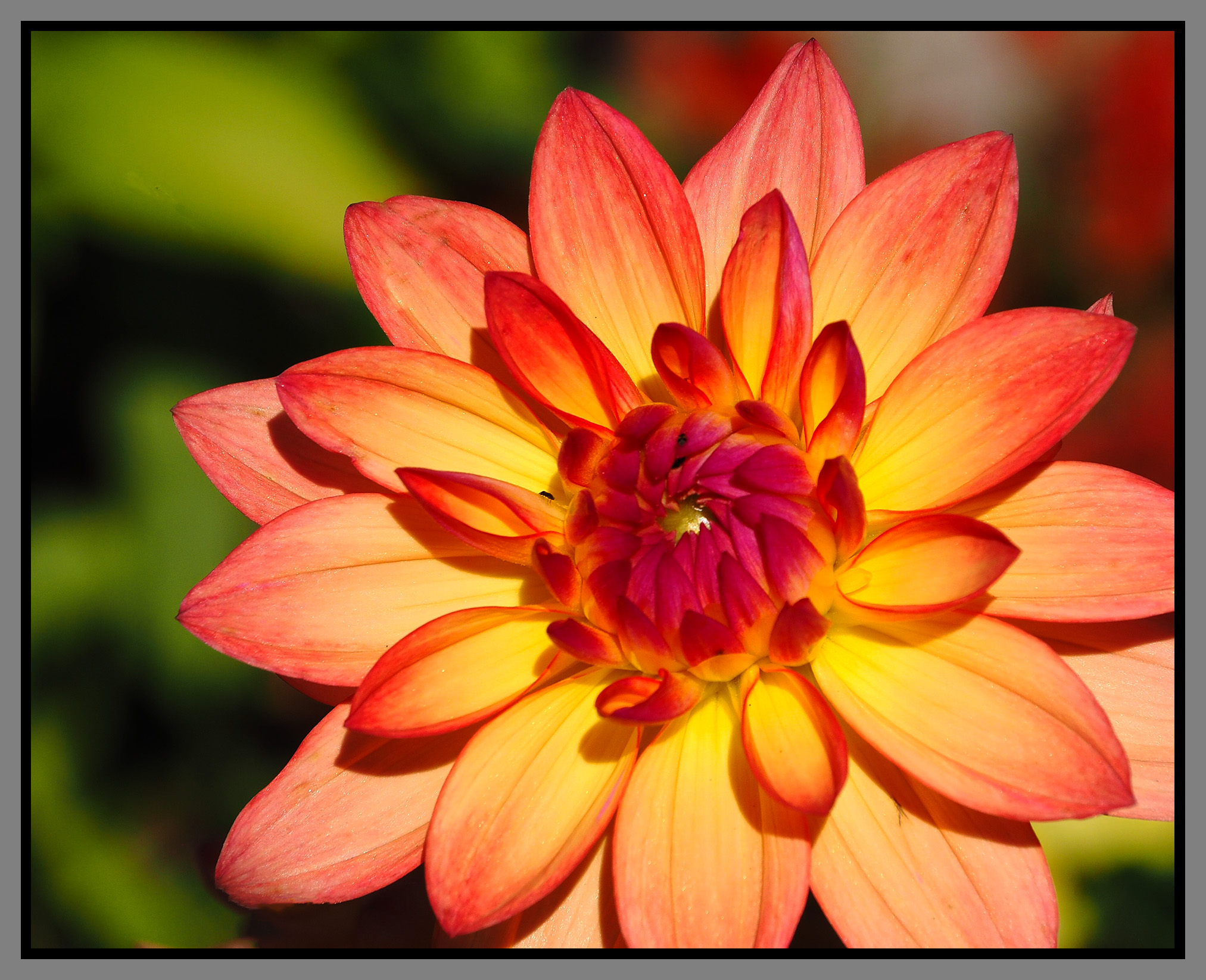 Autumn Flower - Digital (Shallow Depth of Field) - Name Withheld Per Request