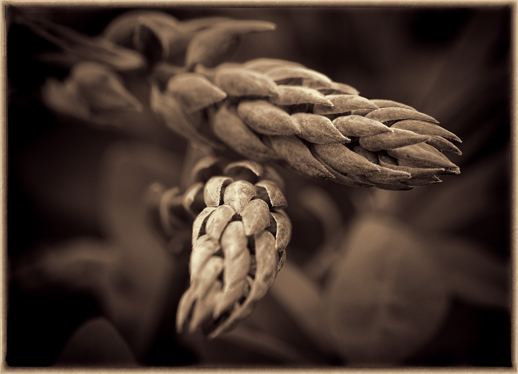 Spring Buds - Digital (Shallow Depth of Field) - Name Withheld Per Request