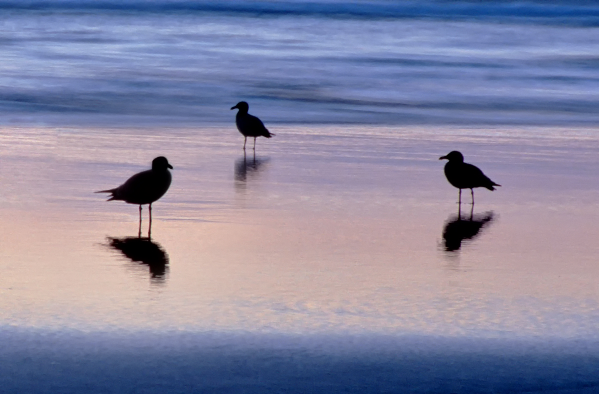 Gull Trilogy - Digital (Shallow Depth of Field) - Name Withheld Per Request