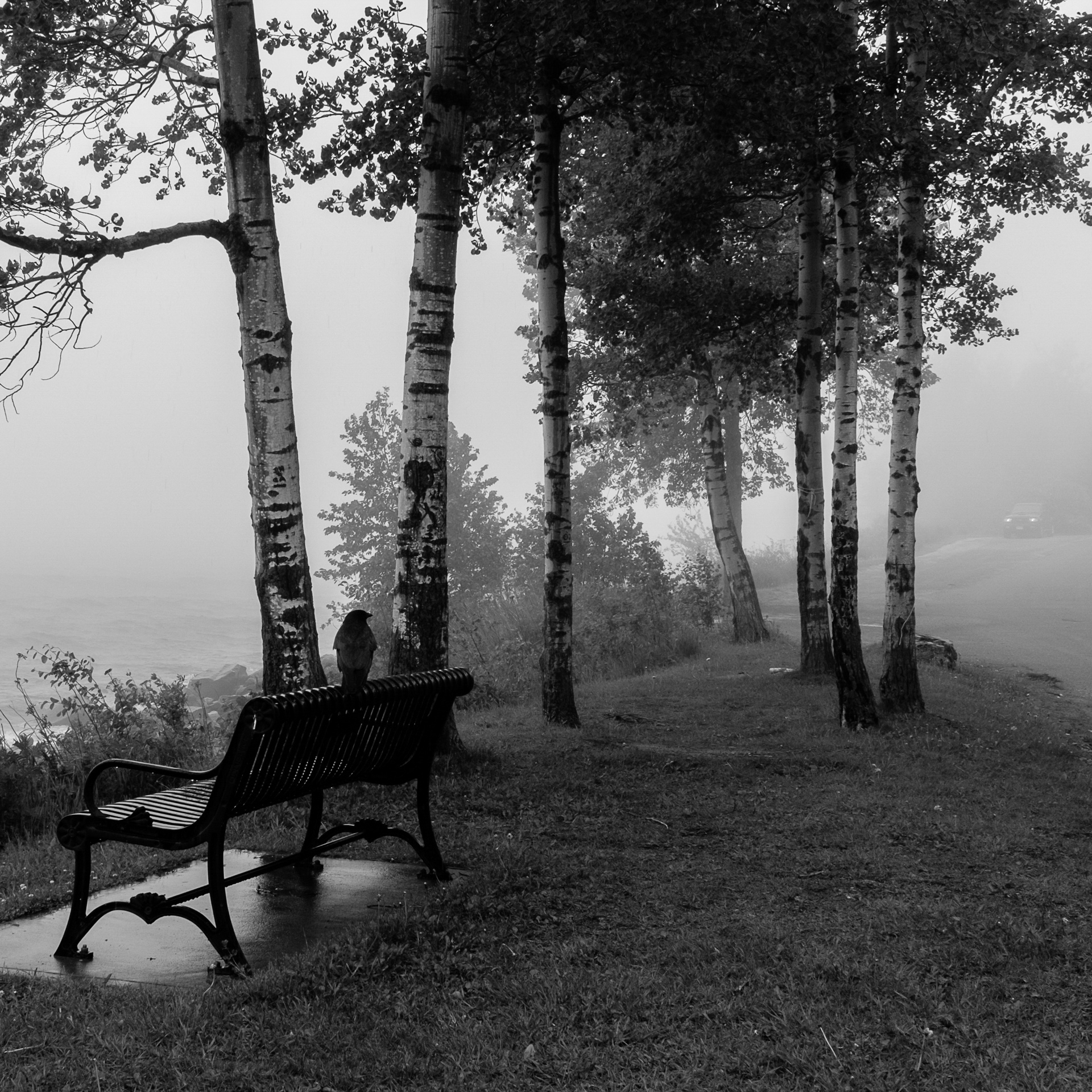 Foggy Morning Encounter - Monochrome Print (Open) - Name Withheld Per Request
