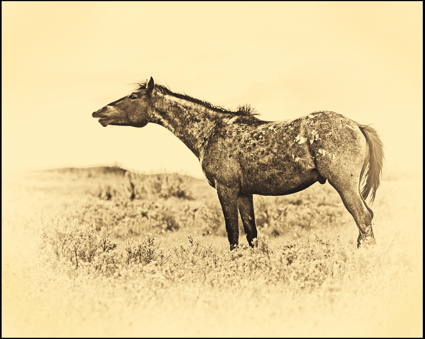 Badlands Staillion, Teddy Roosevelt Herd - Monochrome Print (Open) - Name Withheld Per Request