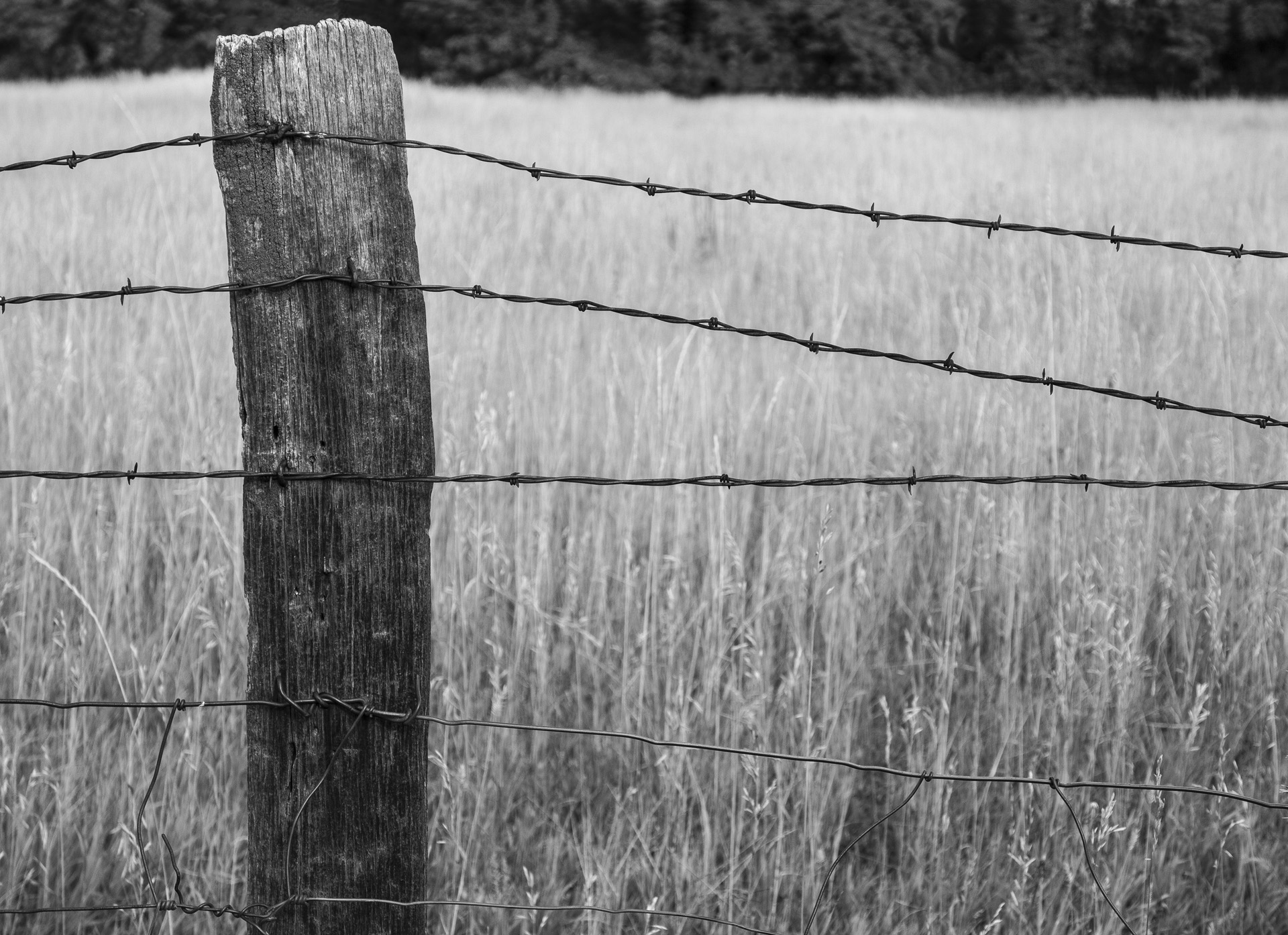 The Old Fence Post - Monochrome Print (Open) - Name Withheld Per Request