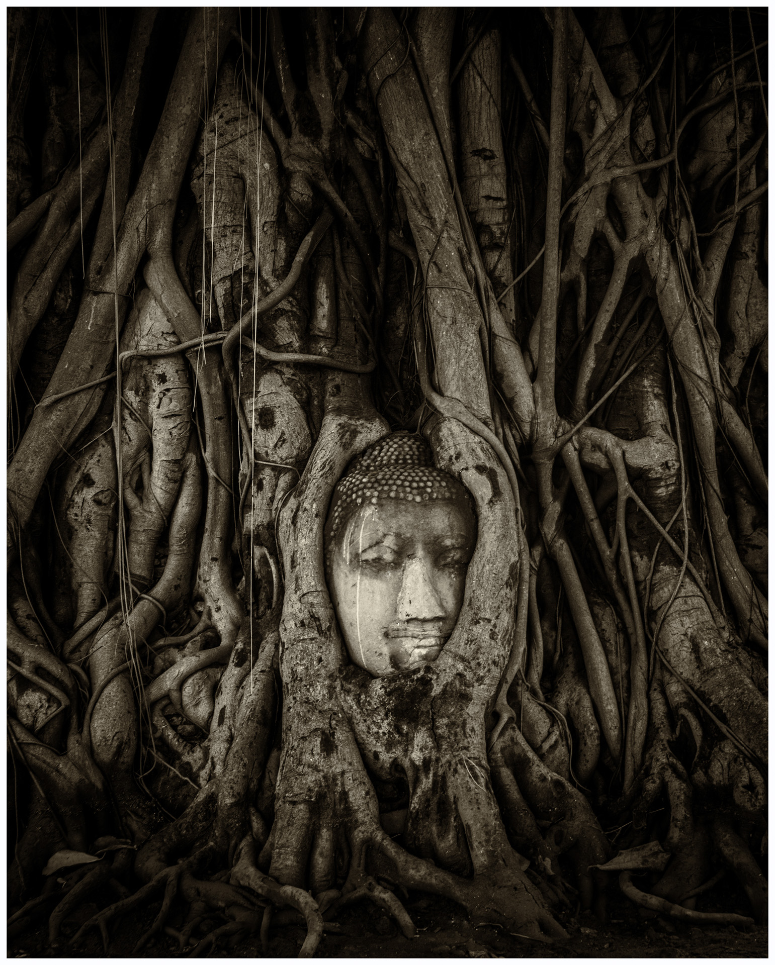 Buddha Head Entwined in Tree Roots - Monochrome Print (Open) - Name Withheld Per Request